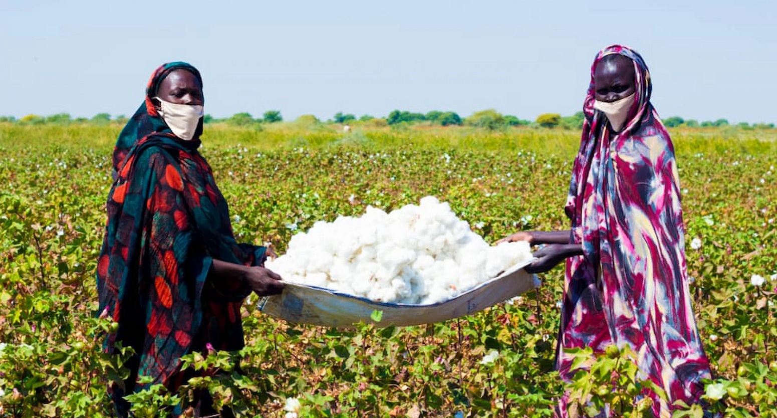 Cotton, stability, and 24,000 opportunities in Sudan's White Nile